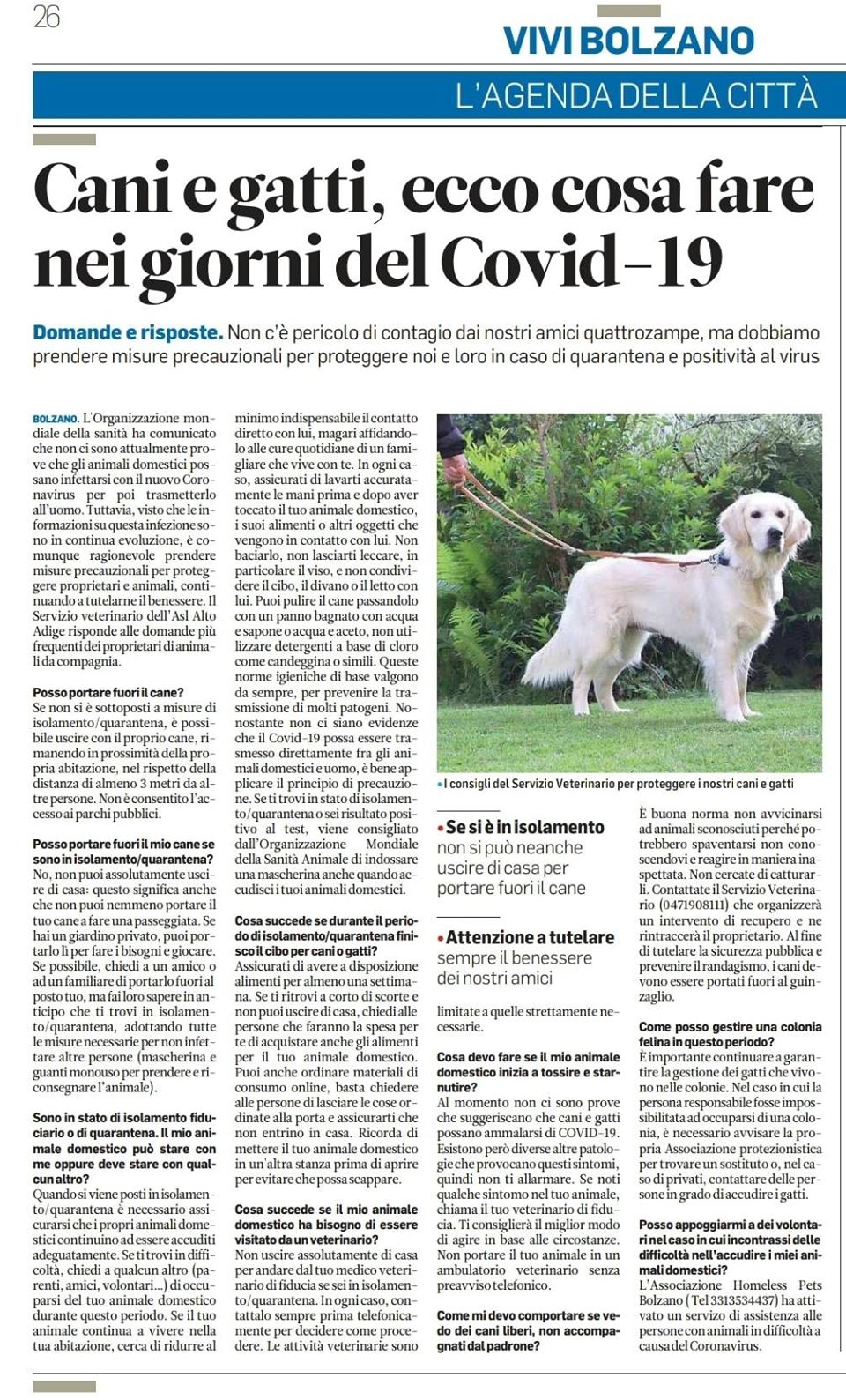 Domande Al Veterinario Cane covid-19: le risposte del servizio veterinario – homeless